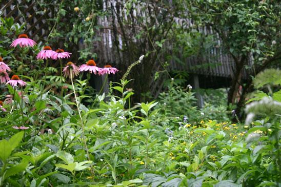 August garden at home