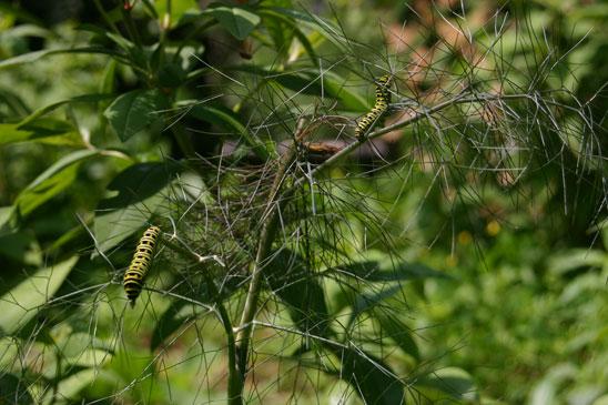 2catepillars