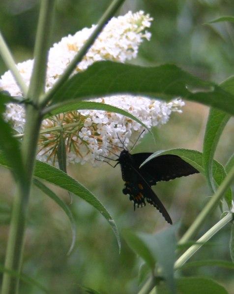 strangebutterfly